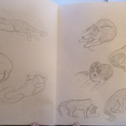 Border Collie sketches