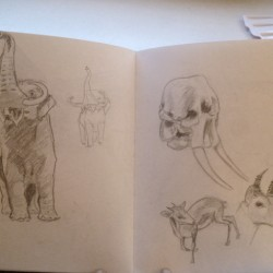 Elephant and Mammoth Sketches!