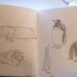 Sketches of Penguins, lions & tigers